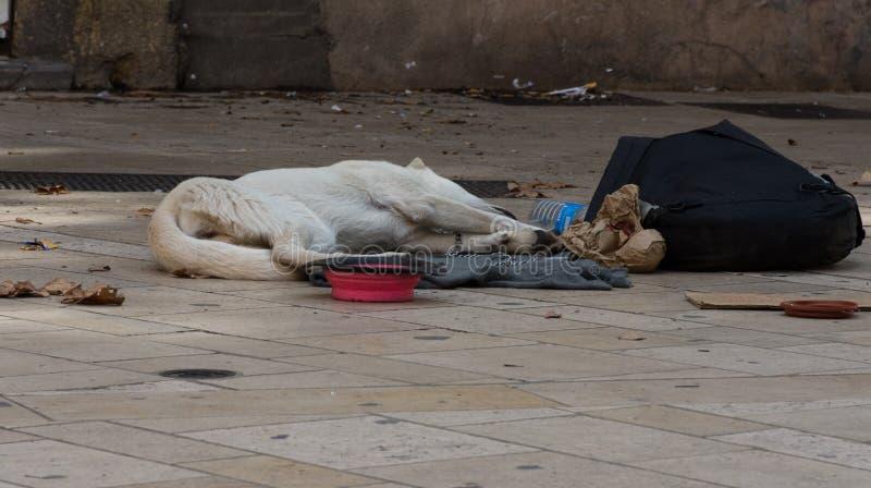 Cão desabrigado macilento fotografia de stock royalty free