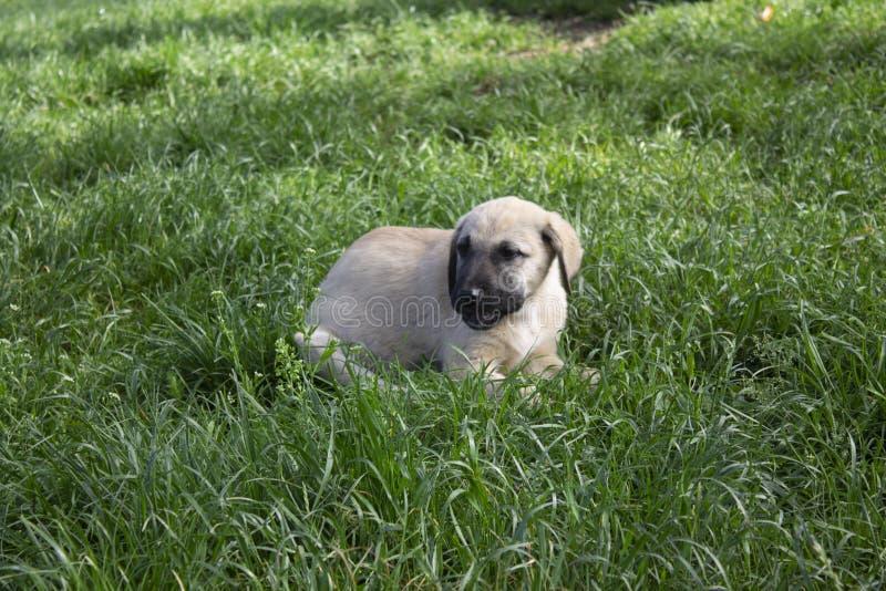 Cão desabrigado na natureza com fundo blured imagens de stock