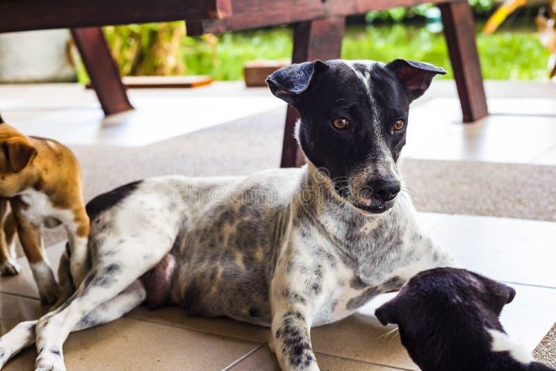 Cão desabrigado que senta-se na terra fotos de stock royalty free