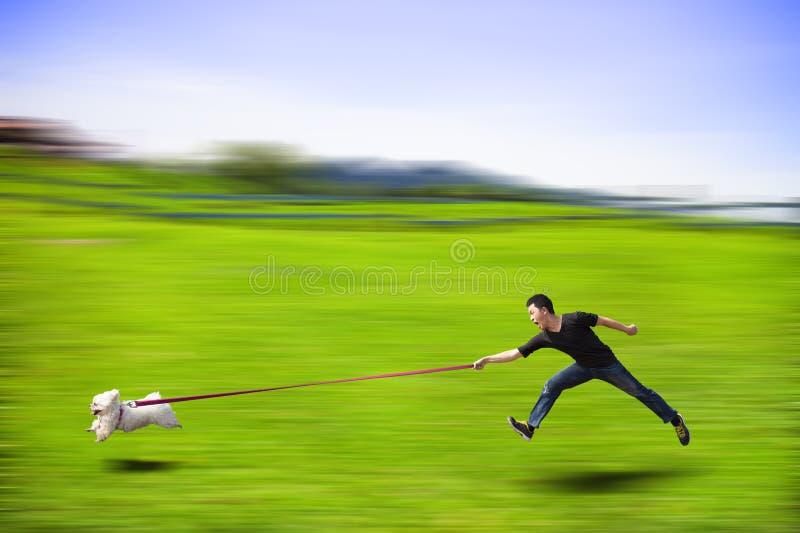 Cão desobediente que corre rapidamente e que arrasta um homem pela trela foto de stock royalty free