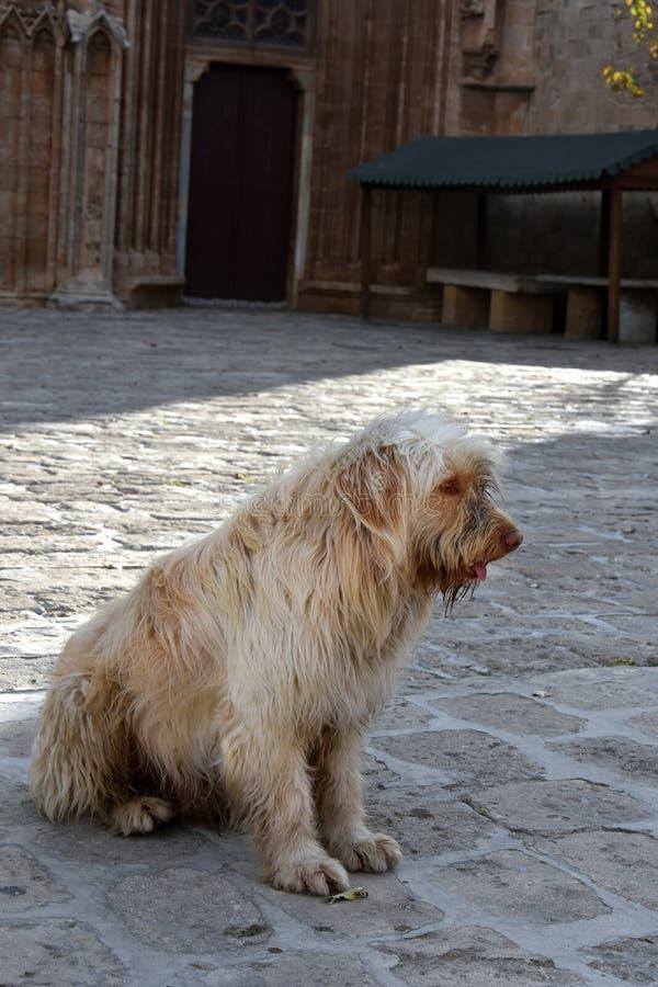 Cão disperso fotografia de stock royalty free