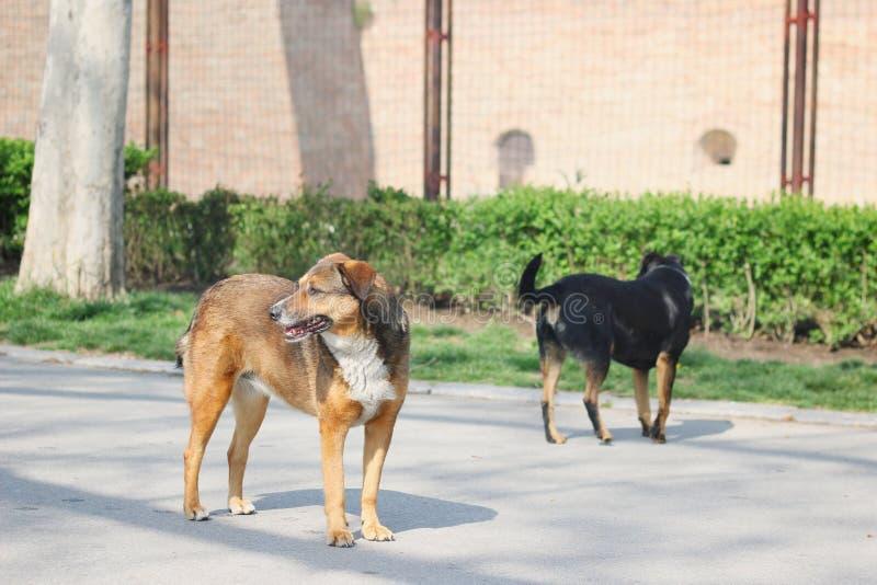 Cão disperso abandonado foto de stock