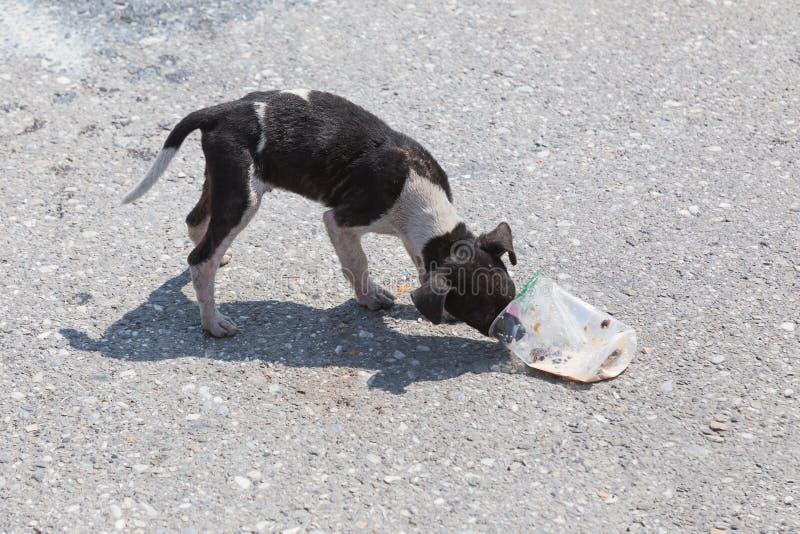Cão disperso com fome imagens de stock royalty free