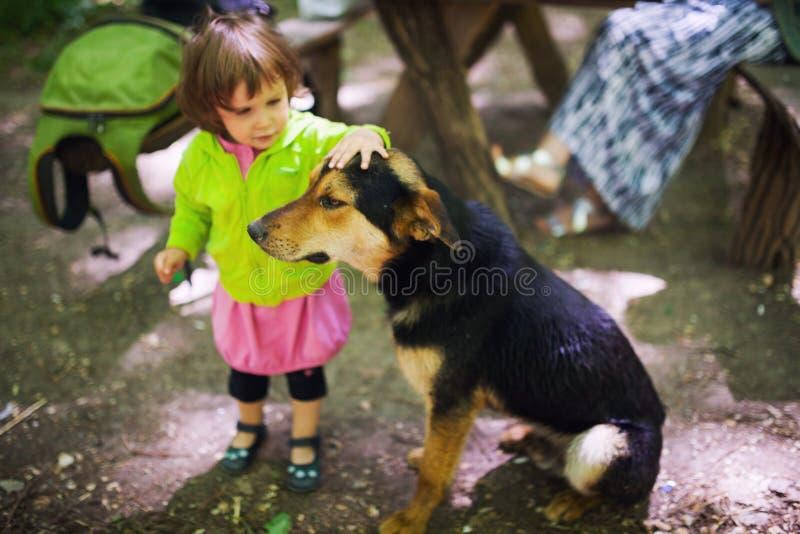 Cão disperso das trocas de carícias da criança foto de stock