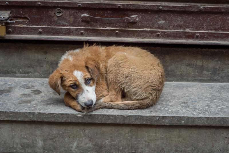Cão disperso desabrigado fotos de stock royalty free