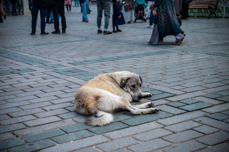 Cão disperso desabrigado abandonado que coloca no quadrado na cidade grande imagem de stock
