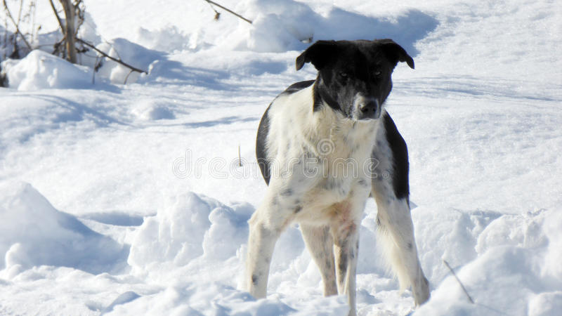 Cão disperso em uma neve fotografia de stock
