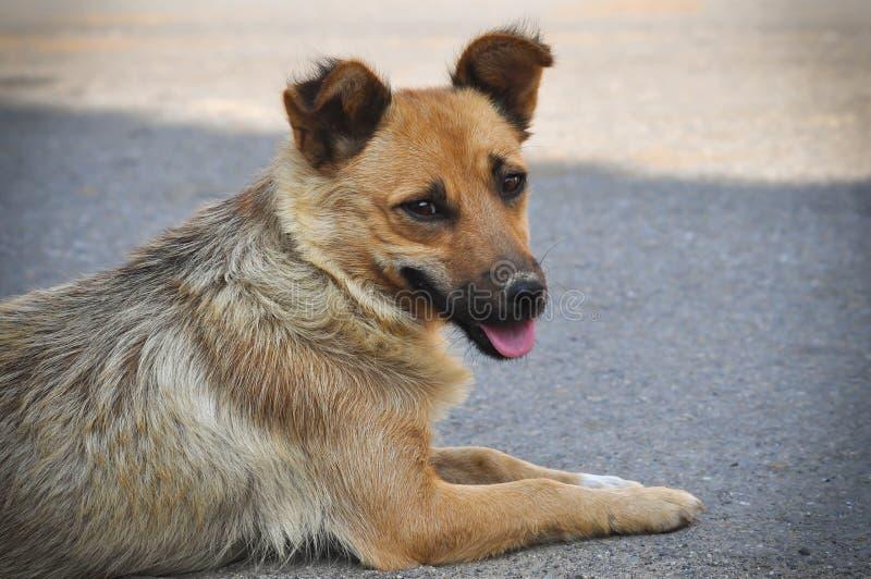 Cão disperso que encontra-se na rua foto de stock royalty free
