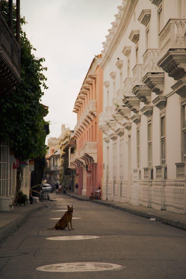 Cão disperso que senta-se no meio de uma rua fotografia de stock