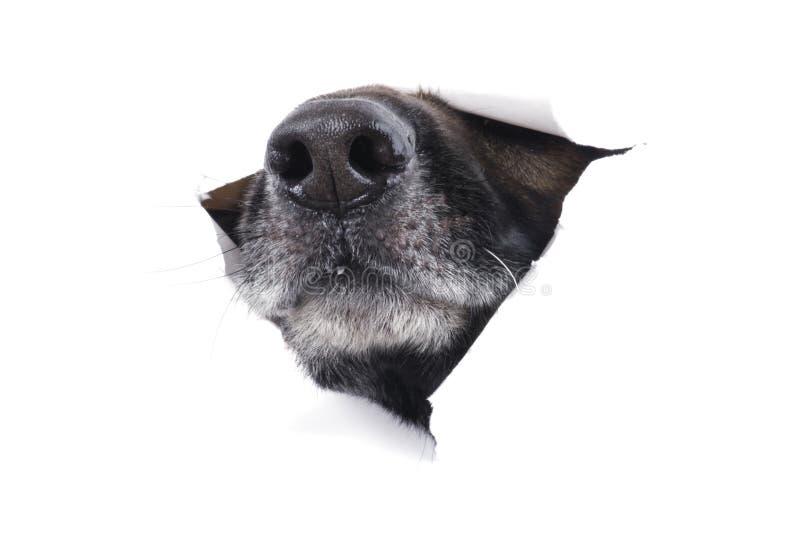 Cão do açaime foto de stock royalty free