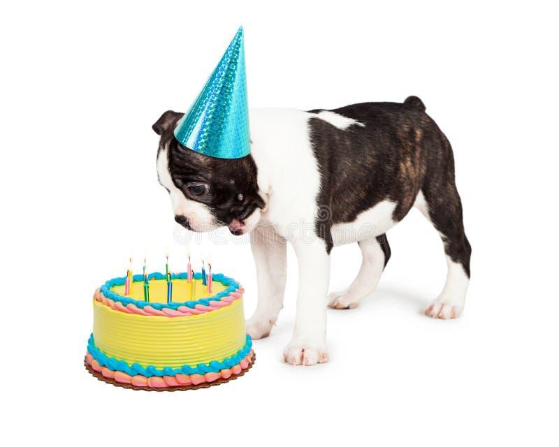 Cão do aniversário que funde para fora velas fotografia de stock