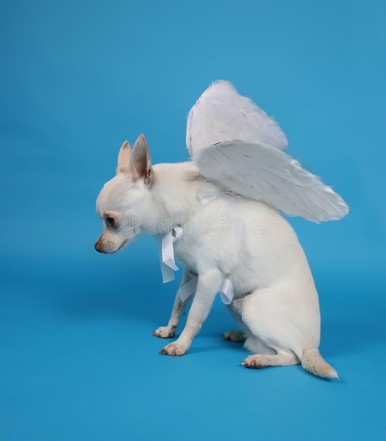Cão do anjo fotos de stock
