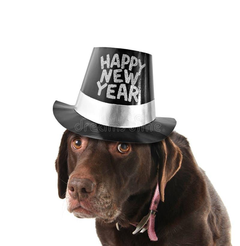 Cão do ano novo feliz foto de stock royalty free