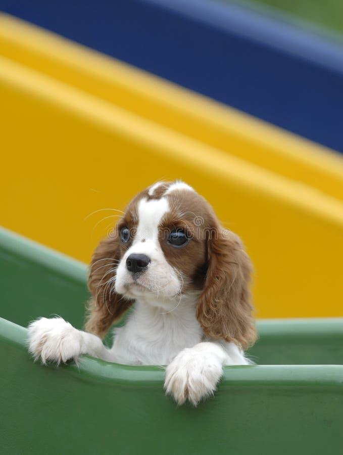 cão do bebê fotos de stock royalty free
