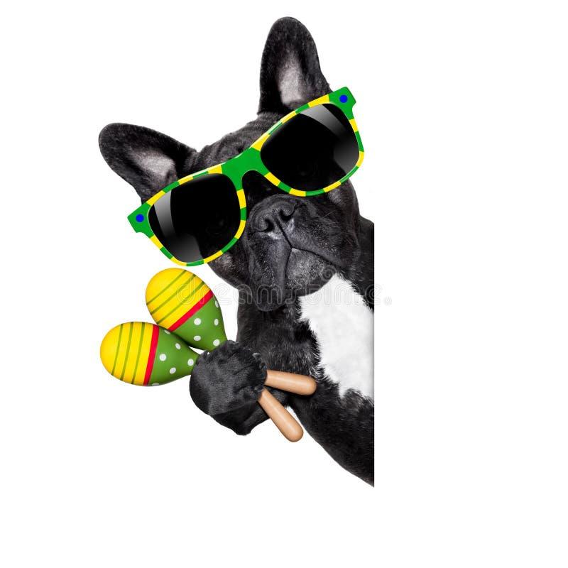 Cão do brasileiro do verão fotografia de stock