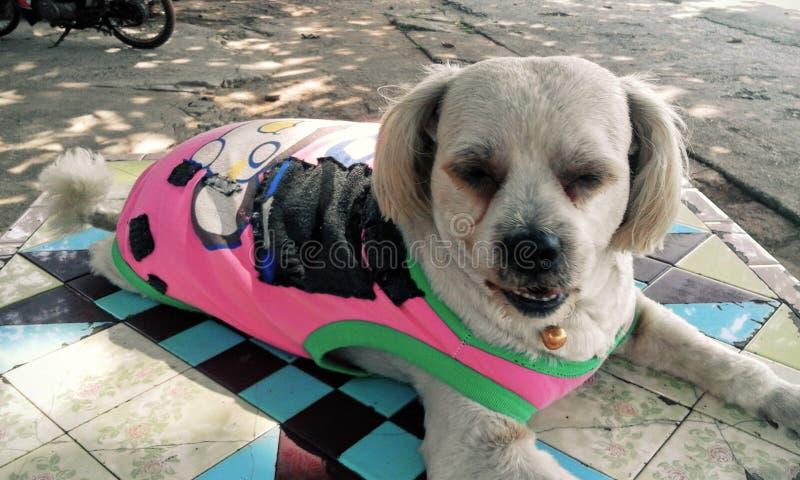 Cão do cão do cão fotos de stock royalty free