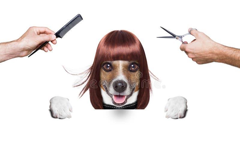 Cão do cabeleireiro fotografia de stock royalty free