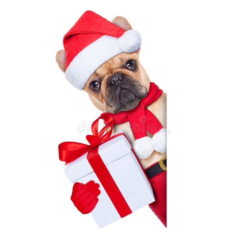 Cão do calus de Santa imagens de stock royalty free