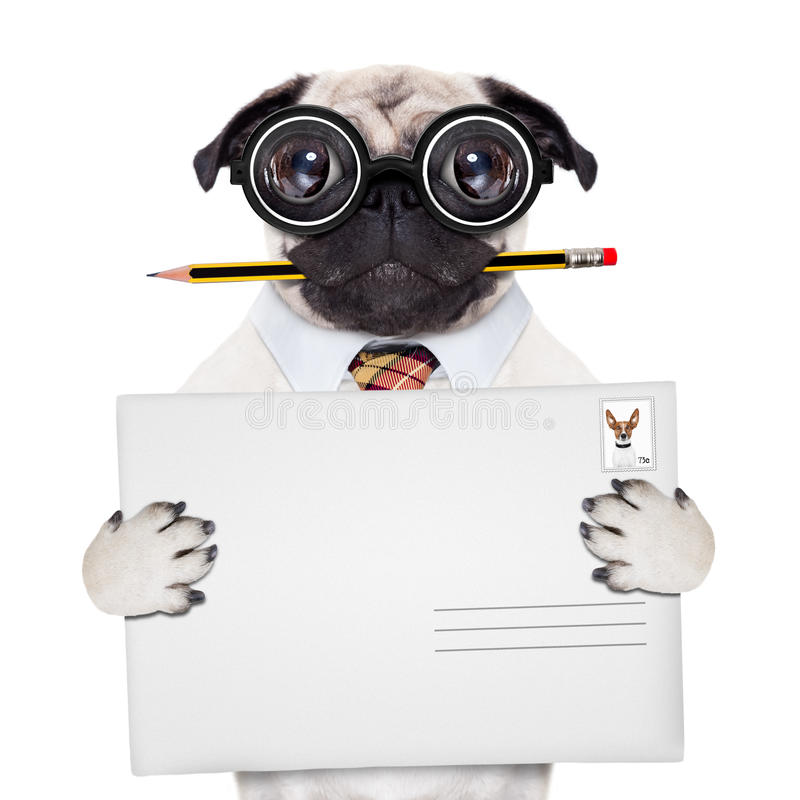 Cão do cargo da entrega de correio imagens de stock royalty free