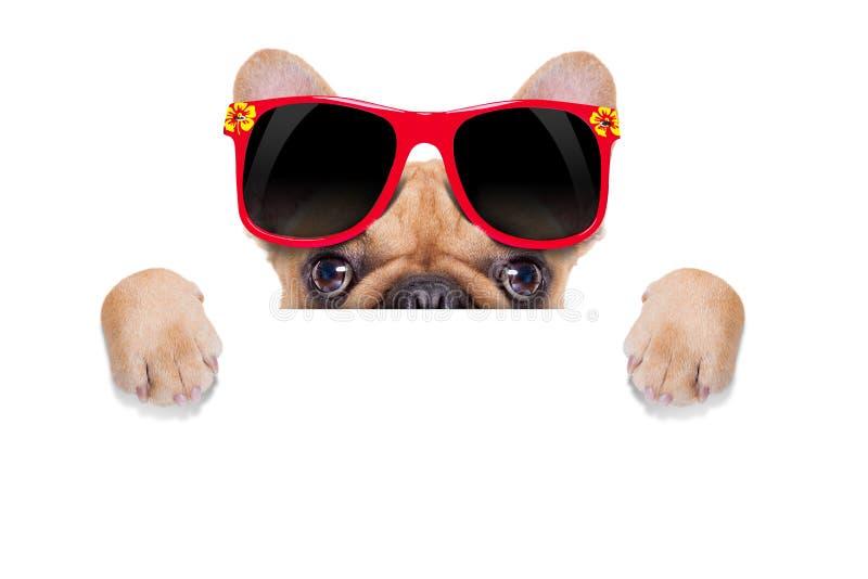 Cão do cartaz da bandeira foto de stock