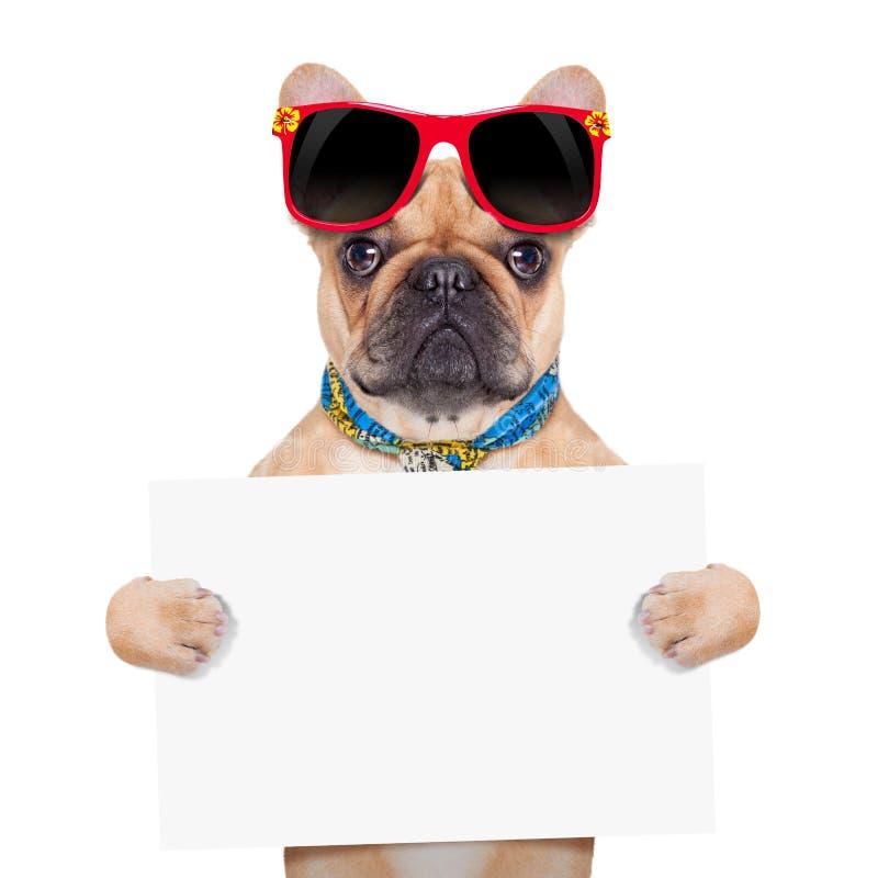Cão do cartaz da bandeira fotos de stock royalty free