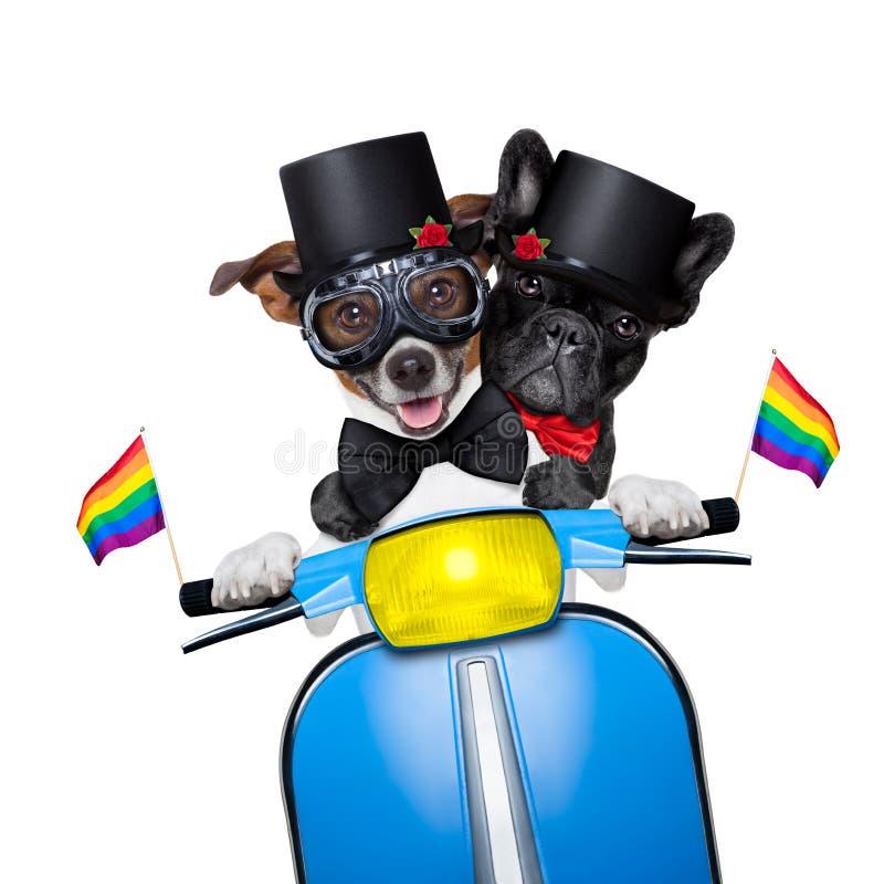 Cão do casamento entre homossexuais imagens de stock