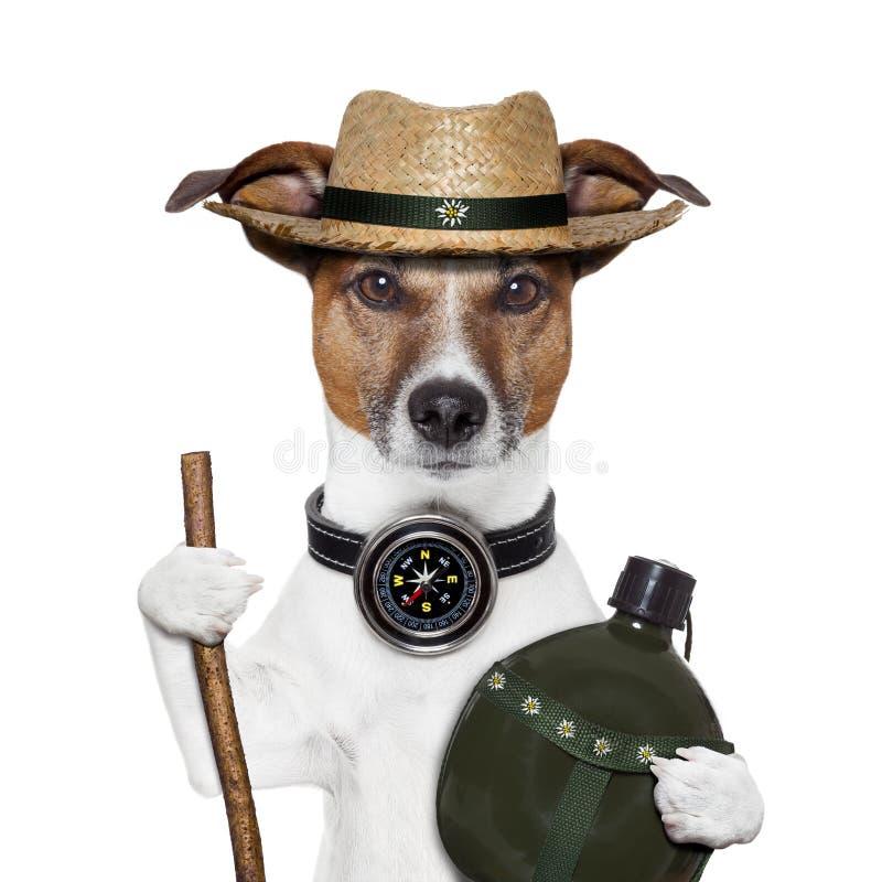 Cão do chapéu do compasso do Hike foto de stock royalty free