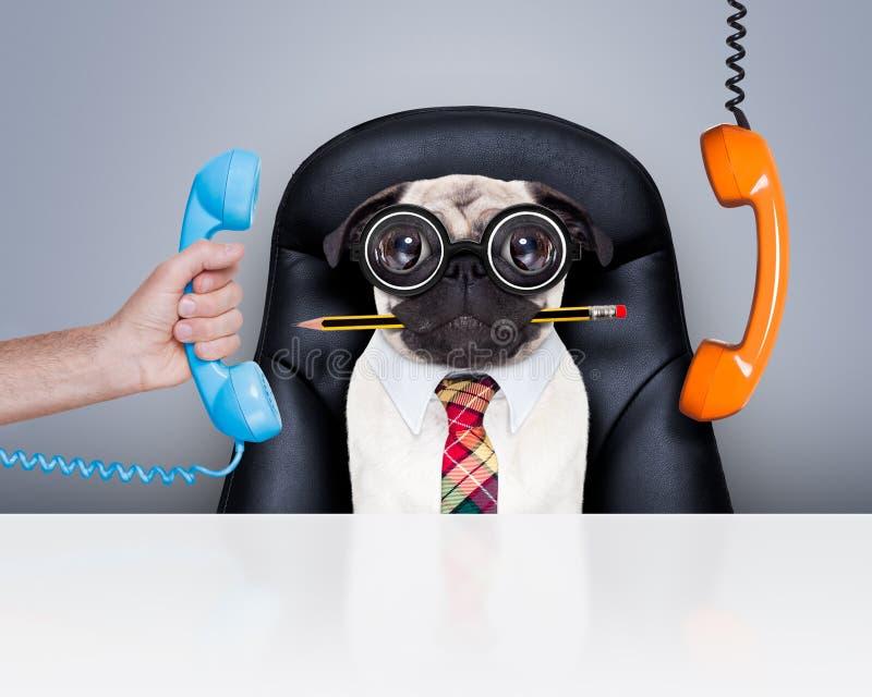Cão do chefe do trabalhador de escritório imagens de stock