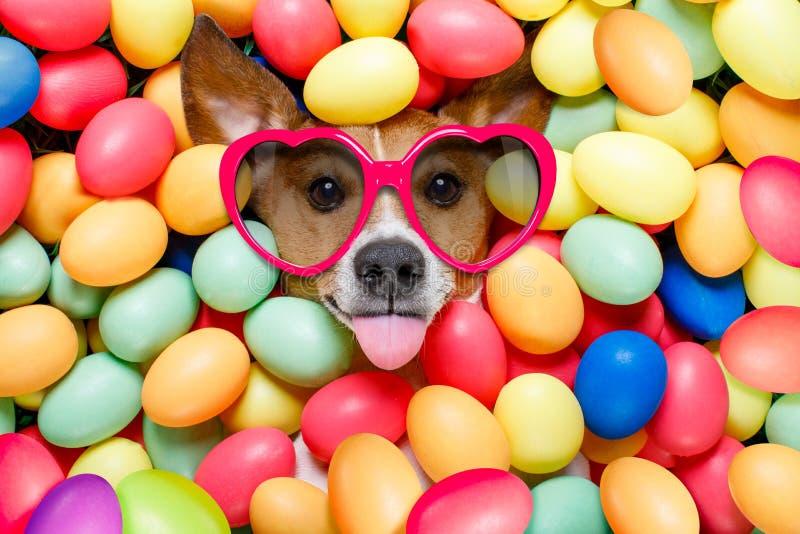 Cão do coelhinho da Páscoa com ovos imagens de stock