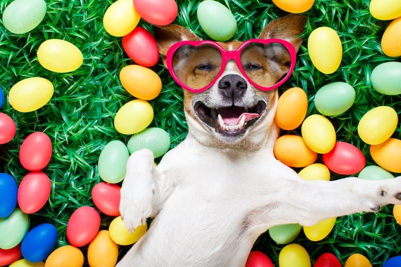 Cão do coelhinho da Páscoa com selfie dos ovos foto de stock