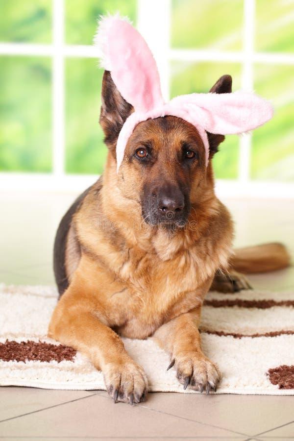 Cão do coelho de Easter foto de stock royalty free