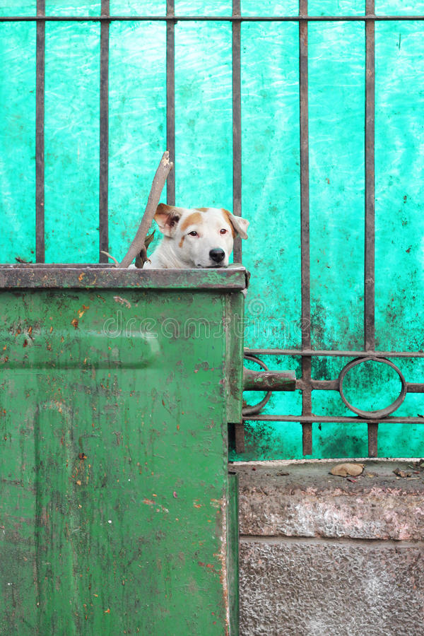 Cão do contentor imagens de stock