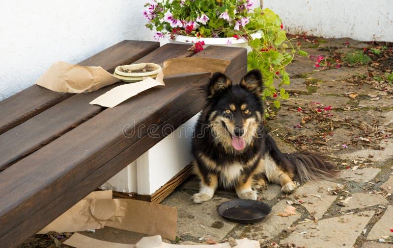 Cão do Corgi de Galês que senta-se pelo banco fotografia de stock