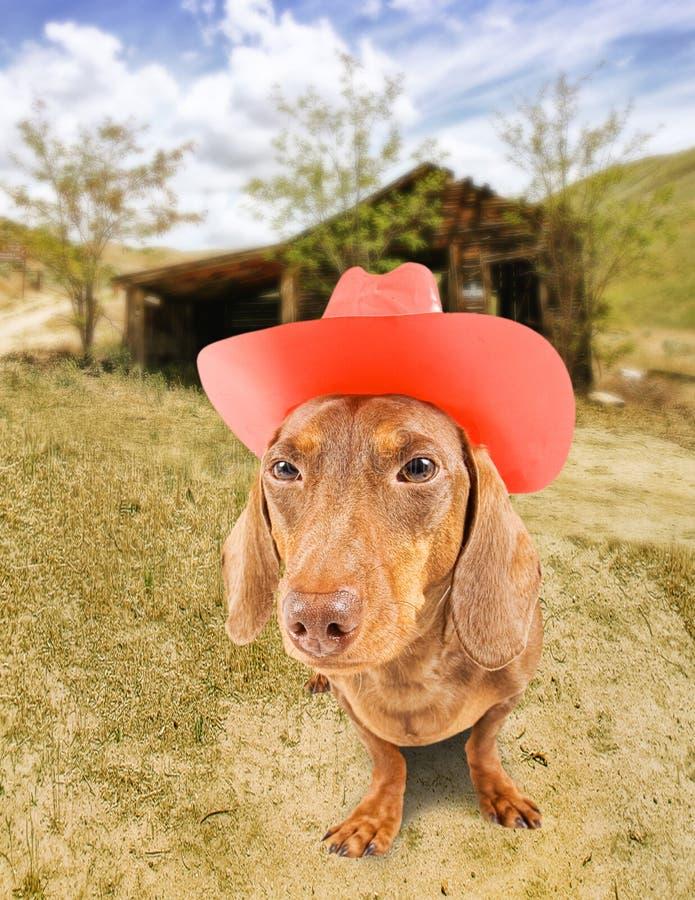 Download Cão do cowboy imagem de stock. Imagem de halloween, dachshund - 16863231
