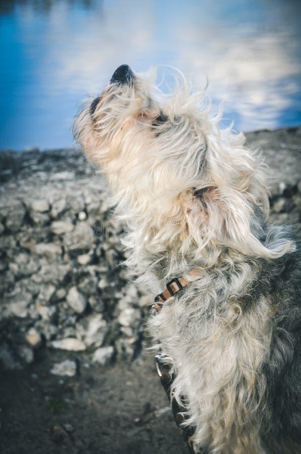 Cão do descascamento fora fotos de stock
