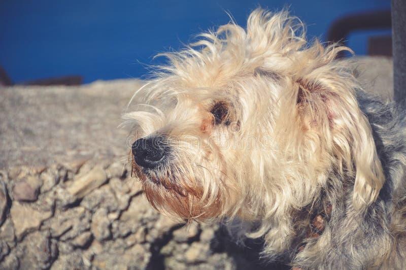 Cão do descascamento fora imagem de stock