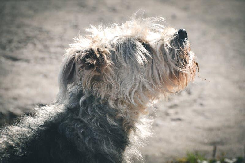 Cão do descascamento fora foto de stock royalty free