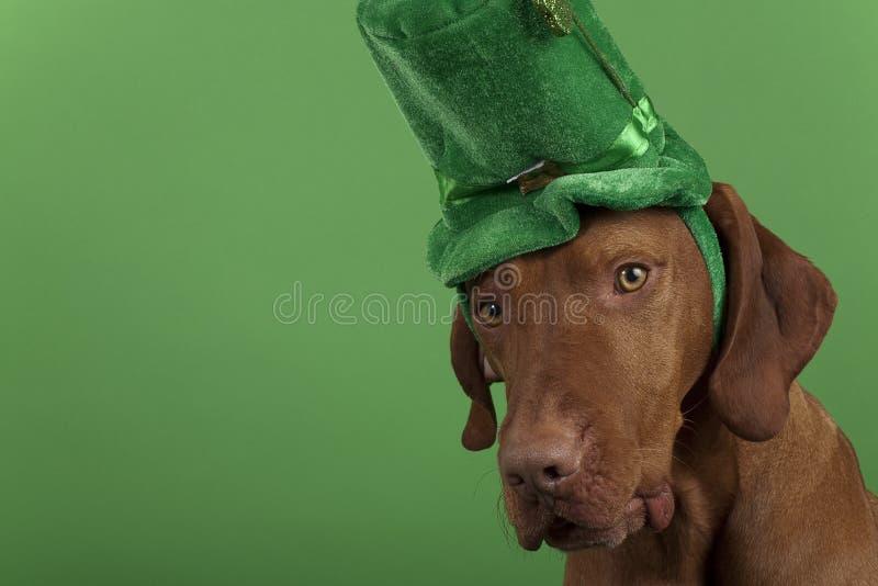 Cão do dia de St.Patrick imagens de stock