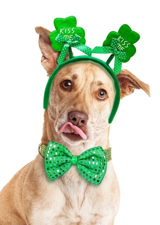 Cão do dia de St Patrick de beijo engraçado foto de stock