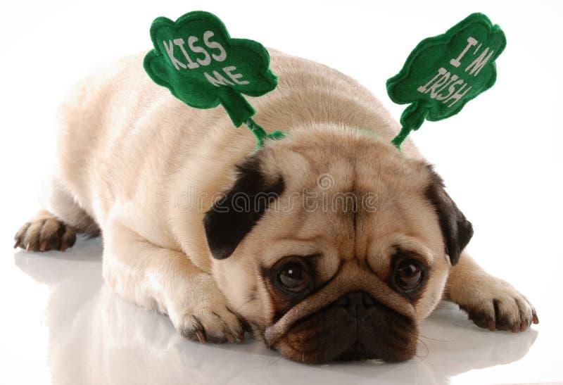Cão do dia do St. Patrick fotos de stock royalty free