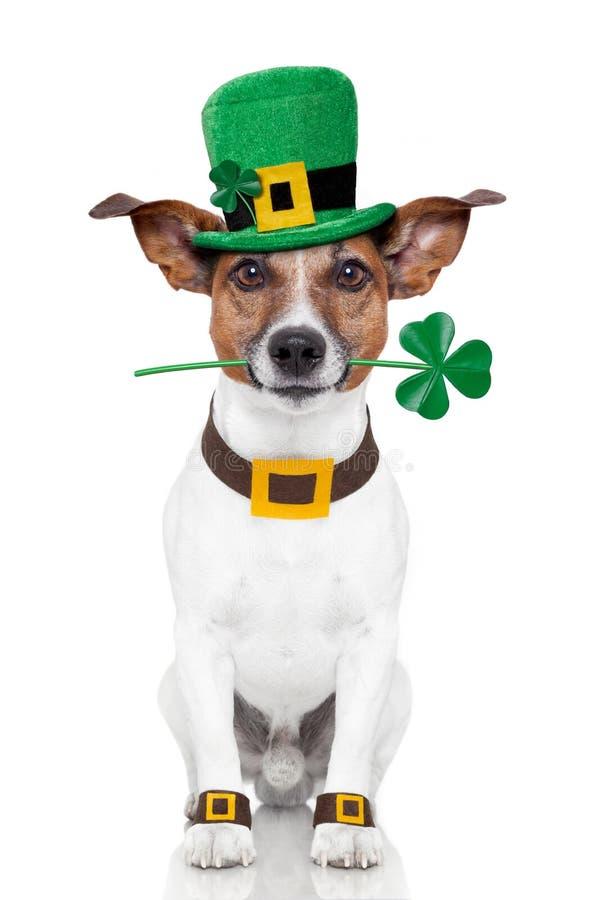 Cão do dia do St. patrick fotografia de stock royalty free