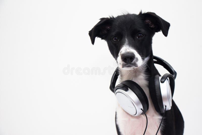Cão do DJ fotografia de stock royalty free