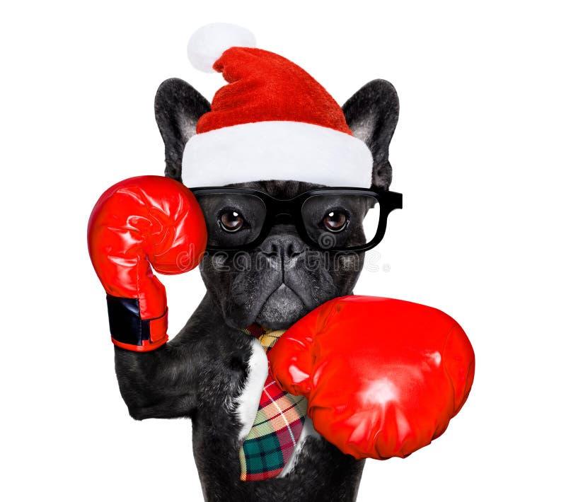 Cão do encaixotamento em feriados do Natal fotografia de stock