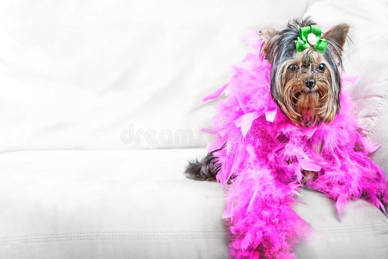 Cão do encanto foto de stock