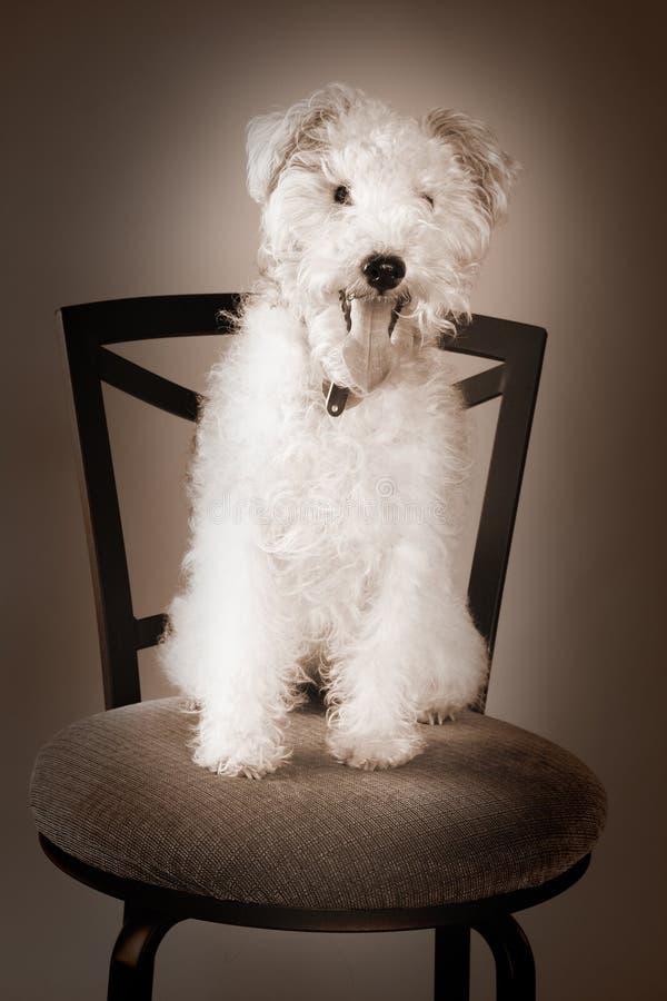 Cão do estúdio fotos de stock