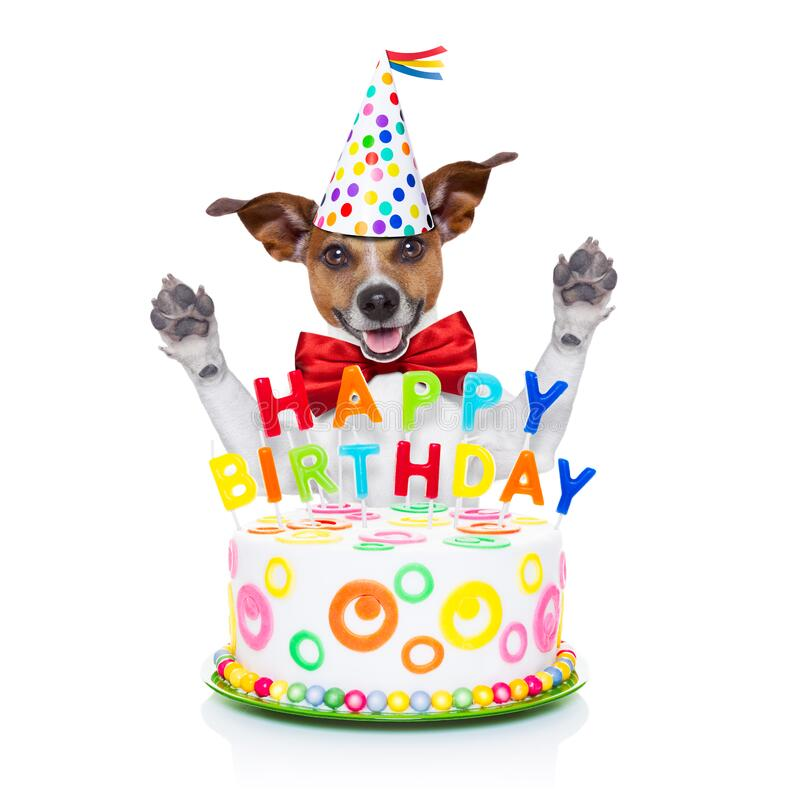 Cão do feliz aniversario foto de stock royalty free