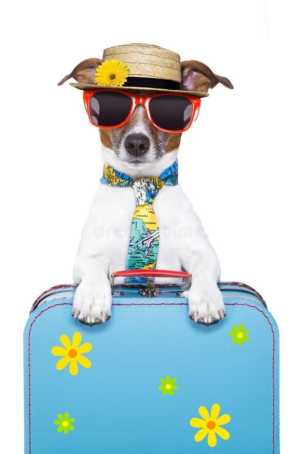 Cão do feriado fotografia de stock