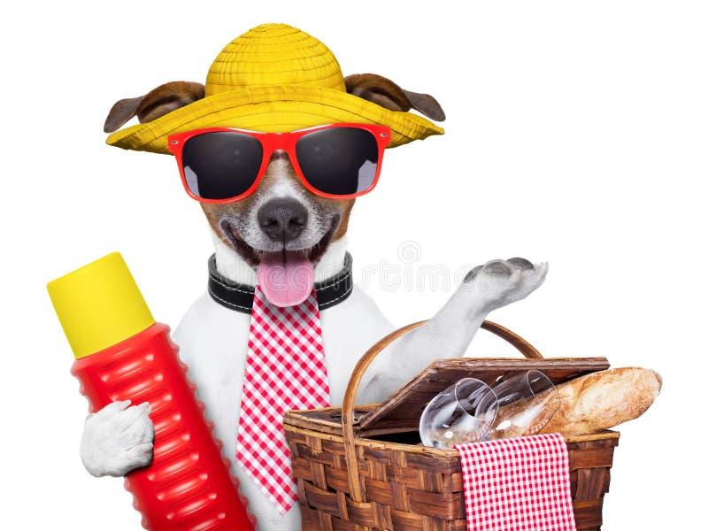 Cão do feriado imagens de stock