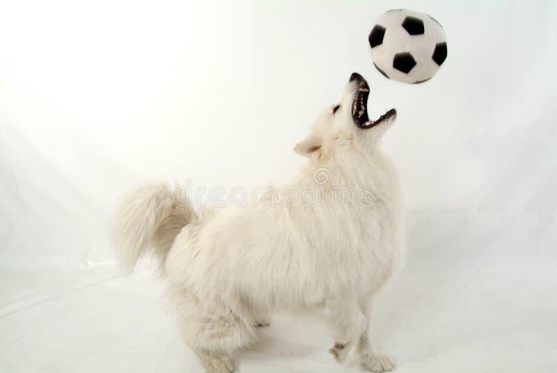 Cão do futebol imagem de stock royalty free