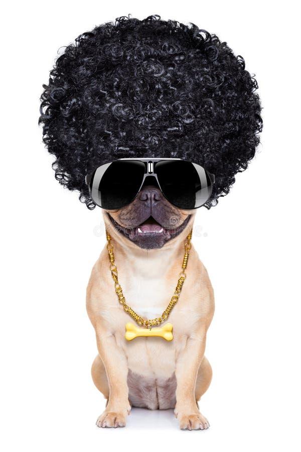 Cão do gângster imagens de stock